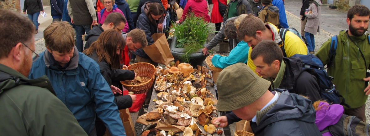 Mushroom foraging at Killrudderry