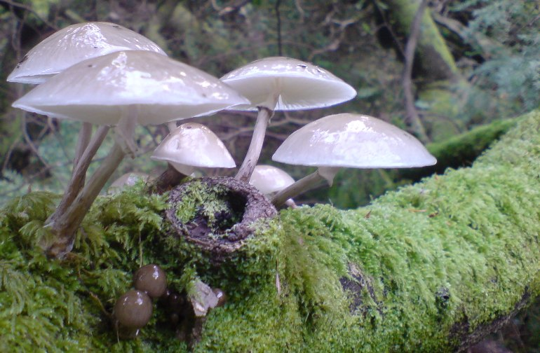 Porcelain fungus - twitter